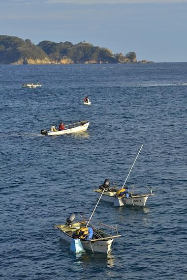 田野畑村のアワビ漁
